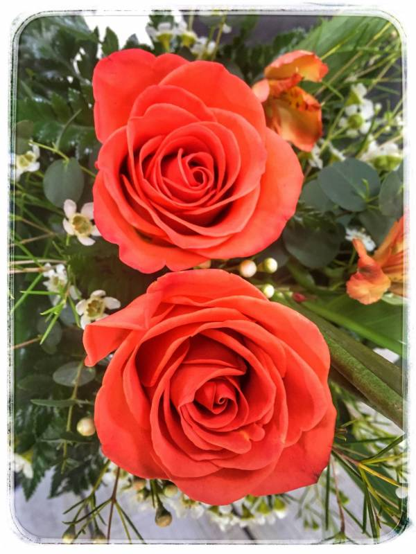 Peach Rose Topiary by Petals Flower Shop & Florist