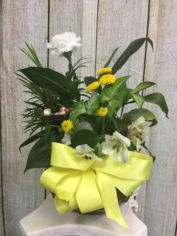 Dear Friend Plant With Fresh Cut Flowers