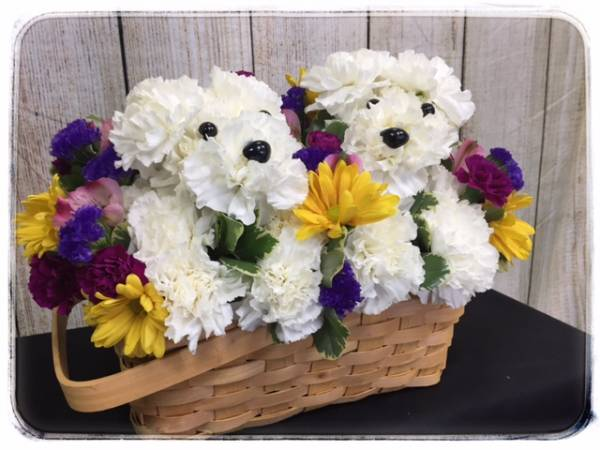 Double Trouble Puppy Dog Basket of Flowers by Petals Flower Shop and Florist